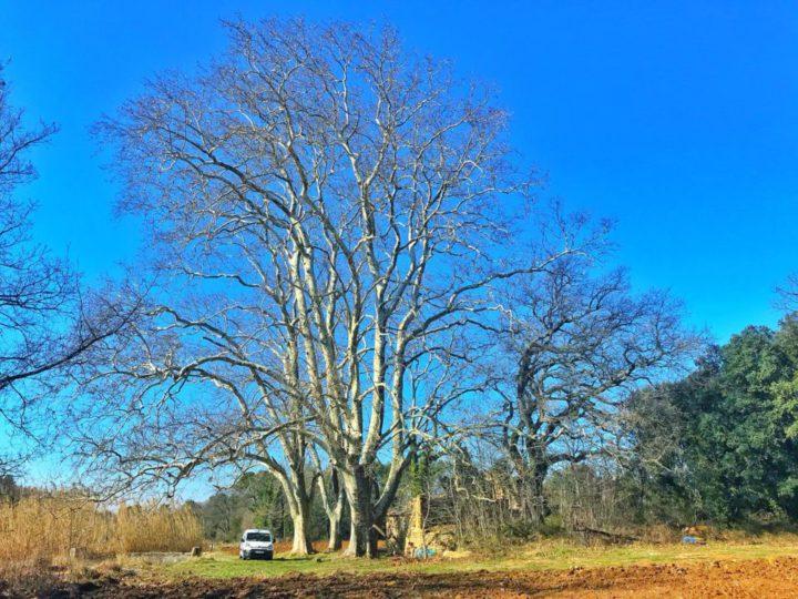Soignons vos arbres